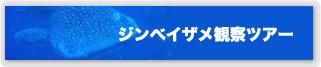 沖縄ジンベイザメツアー